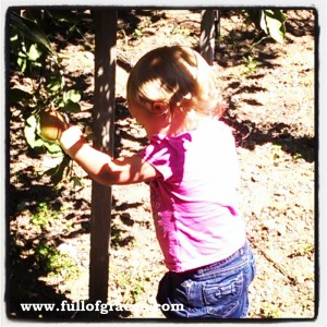 Miss Annie picking her first apples!
