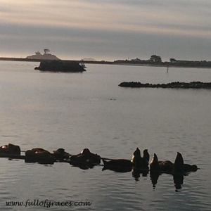 This was our view for dinner: harbor sea lions!